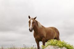 Brown horse in green field Stock Image