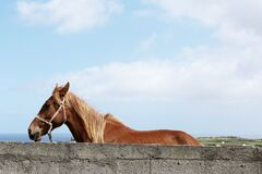 Brown Horse Beside Grey Concrete Wall Under White and Blue Sky during Daytime Stock Images