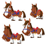 Brown horse in harness with different angles Stock Image
