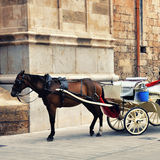 Harnessed Horse Carriage Stock Image