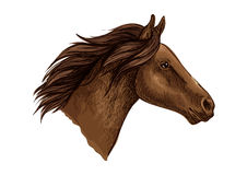 Brown horse head isolated sketch Stock Image
