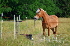 Brown horse II Royalty Free Stock Photos