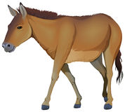 A brown horse. Illustration of a brown horse on a white background stock illustration