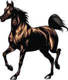 Brown horse isolated Royalty Free Stock Images
