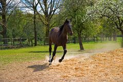 Brown horse in jump Royalty Free Stock Photography