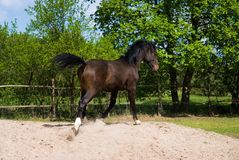 Brown horse in jump Royalty Free Stock Photos