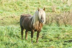 Brown horse with long mane covering head and eyes Stock Photo