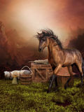 Brown horse on a meadow Royalty Free Stock Photography