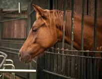 Brown horse in the Moscow zoo stock photos