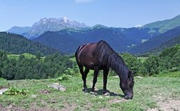 Brown horse on mountain grassland Stock Photography