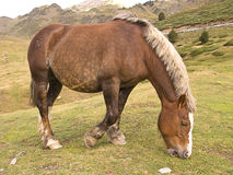 Brown horse in mountains stock photos