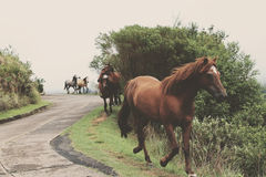 Brown Horse Near Green Grass and Tree during Daytime Royalty Free Stock Photo