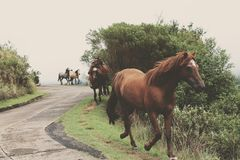 Brown Horse Near Green Grass and Tree during Daytime Royalty Free Stock Image