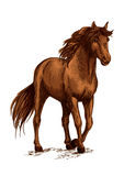 Brown horse pacing calm in wild. Beautiful bay mare with glossy shining horse hair and waving mane. Modest stallion bending front hoof. Vector color sketch Royalty Free Stock Photography
