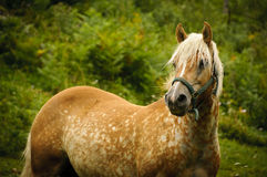 Brown horse in a pasture Stock Photo