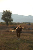 Brown horse in picturesque pasture Royalty Free Stock Image