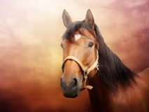 Horse portrait photo stock photography