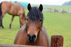 Brown horse portrait. stock photo
