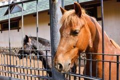 Brown horse portrait in the pen stock photos