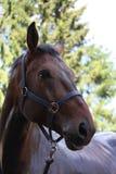 Brown horse portrait after shower Stock Photos