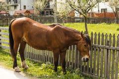 Brown horse preparing to graze Royalty Free Stock Image