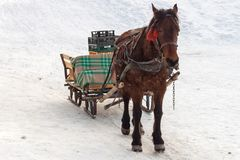 Brown horse pulling a sleigh with empty plastic crates, in Winter royalty free stock photo