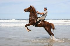 Brown horse rearing in sea. Rearing brown horse and rider in the water at the beach Stock Photography