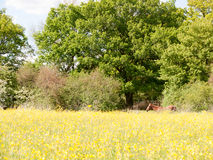 A brown horse resting in a summer field of buttercups outside uk Stock Photos