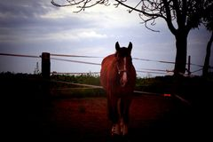 Brown horse. Brown riding horse on grazing Royalty Free Stock Photos