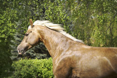 Brown horse run Royalty Free Stock Photography