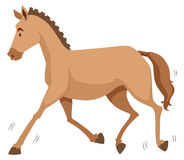 Brown horse running alone Stock Photography