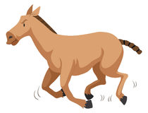 Brown horse running fast Royalty Free Stock Image
