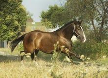 Light brown horse running - photo#12