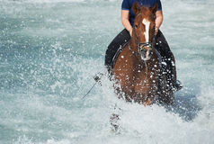 Brown horse running in the ocean. With a rider Stock Image
