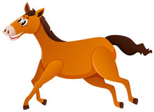 Brown horse running on white background Stock Photography