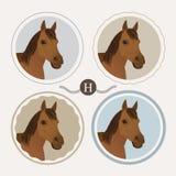 Brown horse Royalty Free Stock Photos