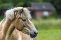 Brown horse with shallow depth of field Royalty Free Stock Photos