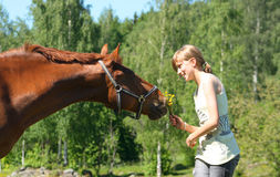 Brown horse with smiling girl stock image