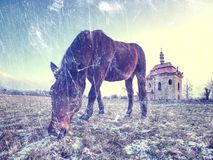 Brown horse in snowy paddock.Added light abstract effect. Winter season in horse farm royalty free stock photography