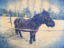 Brown horse in snowy paddock.Added light abstract effect. Winter season in horse farm royalty free stock images