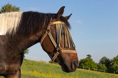 brown horse on springtime meadow royalty free stock photography