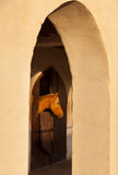 Brown Horse in the Stable Among Sunlit Arches Stock Photography