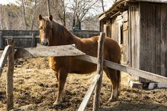 Brown horse in a stall on a sunny day stock image