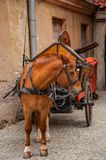 Horse with wagon on pavement road Stock Photos
