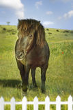 Brown Horse Standing Field Royalty Free Stock Photo