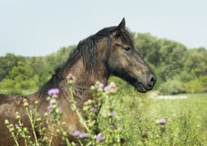 Brown horse  standing on the green trees background. Brown horse with a long black mane are standing on the green trees background Stock Photos