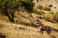 Brown horse standing next to a green tree. In Kabardino-Balkaria Royalty Free Stock Images