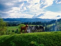 Brown horse standing on sunset. Summer mountains background with. Blue cloudly sky Royalty Free Stock Images