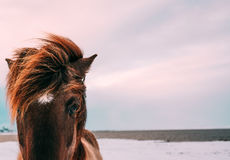 Brown Horse Standing on White Sand during Daytime Royalty Free Stock Images