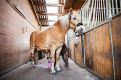 Brown horse stands in a stable Royalty Free Stock Photography